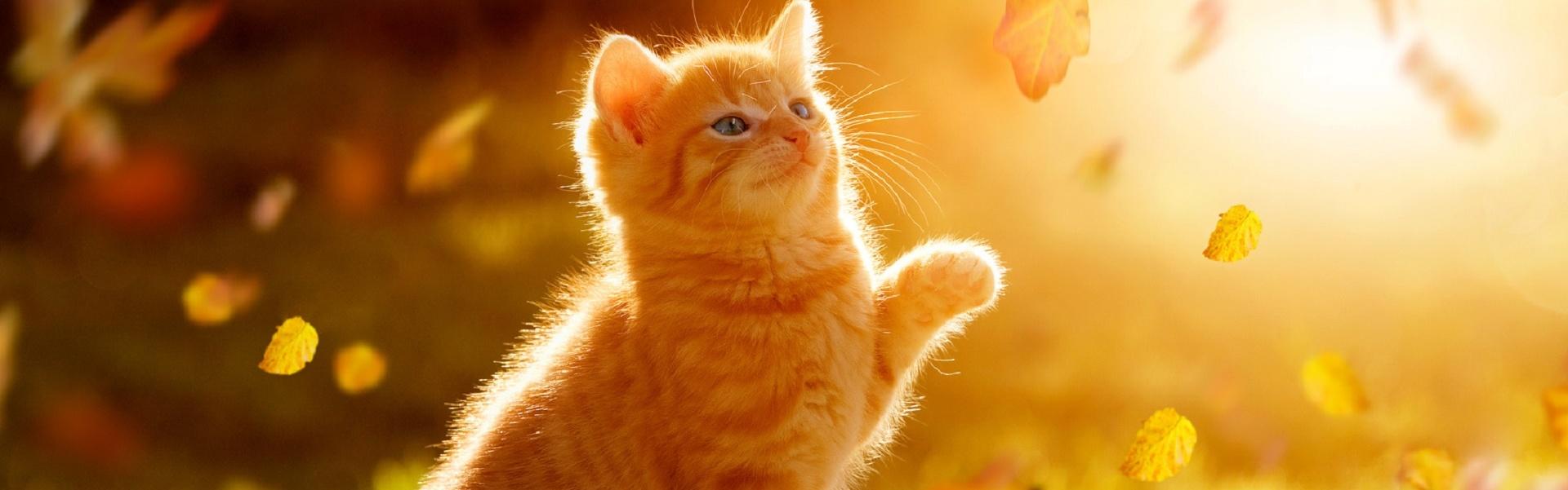 Greenheart Austria - Chemiefreies Katzenfutter und Hundefutter