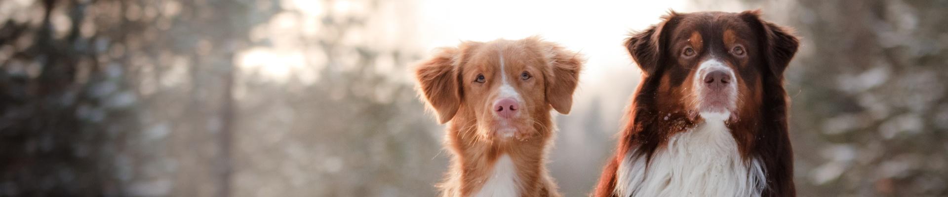 Hundefutter für ausgewachsene Hunde bei Greenheart Austria