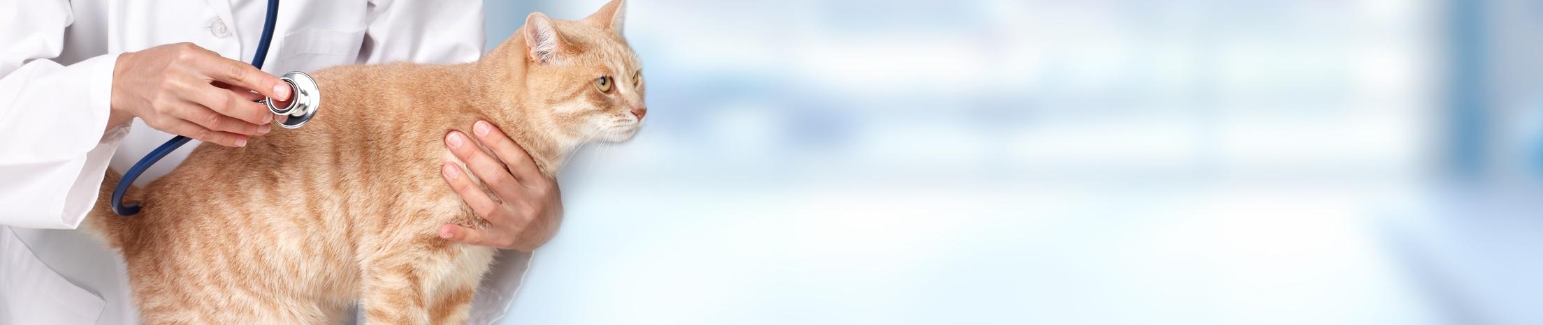 Beratung für Katzenfutter bei Greenheart Austria