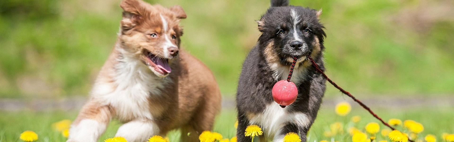 Tiernahrung von Greenheart Austria - Alles natürlich - Keine chemischen Konservierungsstoffe