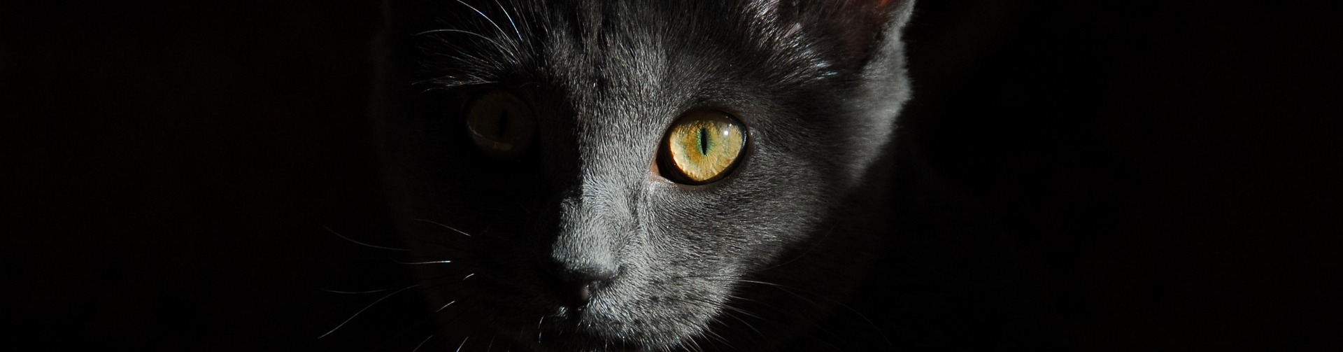 Chemiefreie Tiernahrung für Katzen