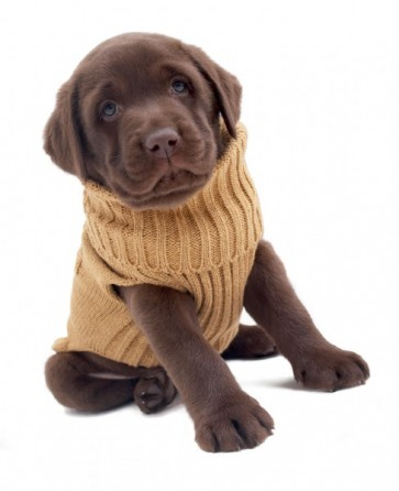 Hundepullover autumn beige