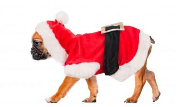 Hundejacke Weihnachtskostüm