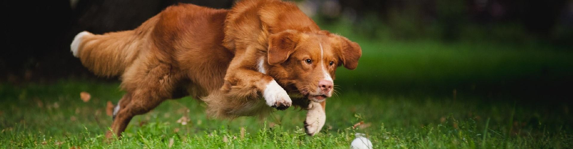 Nahrungsergänzung für Hunde bei Greenheart Austria