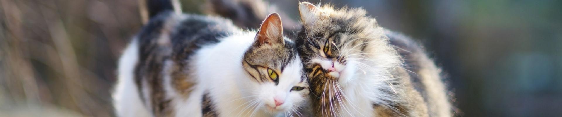 Katzenfutter für Senior Katzen bei Greenheart Austria